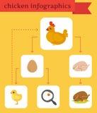 Infographics del pollo Fotografía de archivo libre de regalías