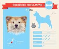 Infographics della razza di Akita Inu Dog Fotografie Stock Libere da Diritti