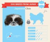 Infographics della razza di Chin Dog del giapponese Immagine Stock
