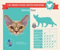 Infographics della razza di Devon Rex Cat illustrazione di stock