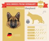 Infographics della razza di Dog del pastore tedesco Immagine Stock Libera da Diritti