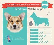Infographics della razza di Pembroke Welsh Corgi Dog Fotografie Stock Libere da Diritti