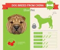 Infographics della razza di Shar Pei Dog Fotografia Stock