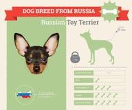 Infographics della razza di Toy Terrier Dog del Russo Fotografia Stock Libera da Diritti