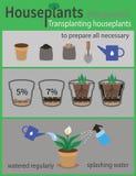 Infographics di trapianto delle piante da appartamento Fotografie Stock