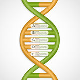 Infographics in the DNA helix form. Stock Images