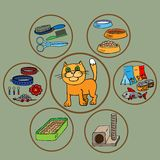 Infographics. Domestic cats and all that is Royalty Free Stock Images
