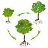 Infographics with a growing tree Stock Photos