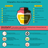 Infographics. How to distinguish natural honey from a fake Stock Photography