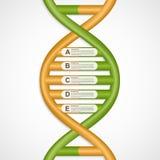Infographics nella forma dell'elica del DNA Immagini Stock