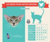 Infographics oriental de la raza del gato stock de ilustración