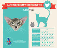 Infographics oriental de race de chat illustration stock
