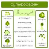 Infographics Sulforaphane有机化合物 免版税库存图片