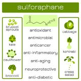 Infographics Sulforaphane有机化合物 库存图片