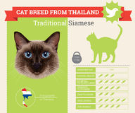 Infographics traditionnel de race de chat siamois illustration libre de droits