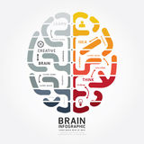 Infographics vector brain design diagram line monochrome colour Stock Photos