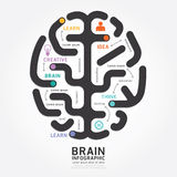 Infographics vector brain design diagram line style. Royalty Free Stock Photo