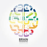 Infographics vector brain design diagram line style template royalty free illustration