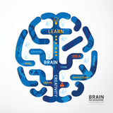 Infographics vector brain design diagram line style template Stock Photography