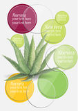 Inforgraphic  Aloe vera  watercolor design for telling your information Royalty Free Stock Photography