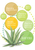 Inforgraphic  Aloe vera  watercolor design Stock Image