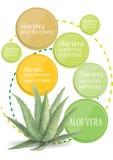 Inforgraphic  Aloe vera  watercolor design Stock Image