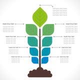 Información-gráfico creativo de la planta Fotos de archivo libres de regalías
