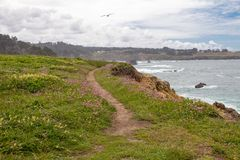 Coastal footpath through wildflowers with seagull flying above, stock photo