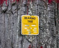A sign posted on a cotton tree in alaska Royalty Free Stock Images