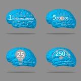Information om hjärna Arkivbild