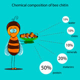 The information poster containing information on a chemical composition of bee chitin Royalty Free Stock Photography