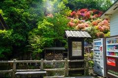 Informationssignageområde på den lokala gatan inklusive dryckvaruautomaten med sikt av färgrika blomma blommor och gräsplanträd Arkivbild