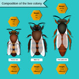 Informative poster on the composition of the bee colony. Information poster on the composition of the bee colony. Beekeeping infographics Royalty Free Stock Photos