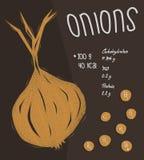 Informazioni delle cipolle, concetto di fatti di nutrizione Fotografie Stock Libere da Diritti