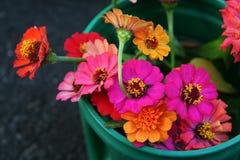 Informeel boeket van de briljante bloei van Zinnia royalty-vrije stock foto