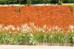 Предпосылка красной кирпичной стены с infr завода травы и муравья Cogon стоковые фото