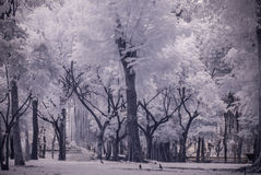 Infra-red photo Landscape garden tree and grass Stock Photo