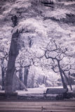 Infra-red photo Landscape garden tree and grass. Infra-red photo Landscape garden tree Stock Photo