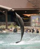 Infracciones de un delfín para los visitantes en Dolphinaris, Arizona Imagen de archivo