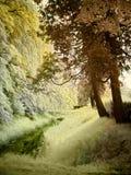 infraröd bäck little Royaltyfria Bilder