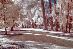 Infraröd bild av ett parkeralandskap i falska färger arkivbild