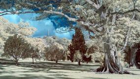 Infraröd bild av ett parkeralandskap i falska färger royaltyfria foton