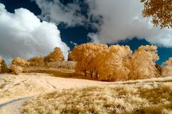 Infraröd bild av ett parkeralandskap i falska färger arkivfoton