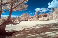Infraröd bild av ett parkeralandskap i falska färger royaltyfri foto
