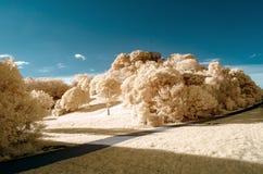 Infraröd bild av ett parkeralandskap i falska färger arkivbilder