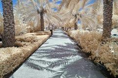 Infraröd bild av träd och buskar i falsk färg Fotografering för Bildbyråer