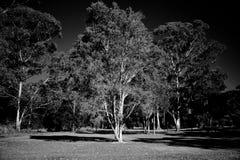Infraröd lantlig trädbakgrund Royaltyfri Foto