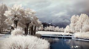 infraröd park Fotografering för Bildbyråer