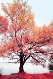 Infraröda spectrum Royaltyfri Foto