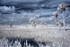 infraröda våtmarker Fotografering för Bildbyråer